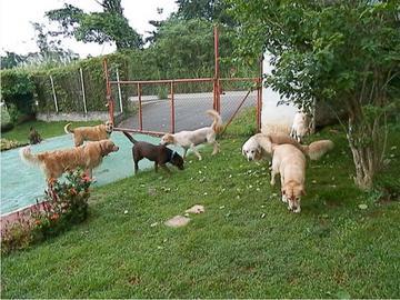 hotel de perros y gatos