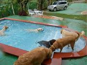 resort para perros con piscina