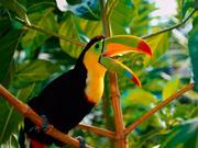Rurrenabaque Jungle